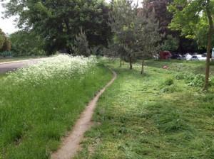 eradication des herbes folles